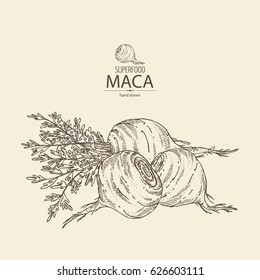 Background with Maca Peruvian. Superfood. Hand drawn
