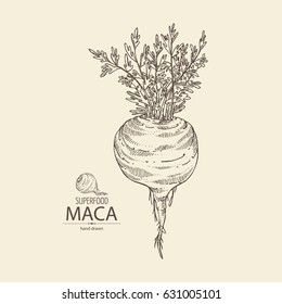 Background with Maca Peruvian. Superfood. Hand drawn