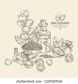 Background with macadamia: branch, leaves, macadamia nuts, soap and bath salt . Cosmetic and medical plant. Vector hand drawn illustration.