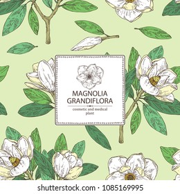 Background with magnolia grandiflora: magnolia flowering branch, leaves, magnolia grandiflora flowers and bud. Cosmetic, perfumery and medical plant. Vector hand drawn illustration