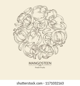Background with mangosteen mangosteen fruit and leaves. Vector hand drawn illustration.