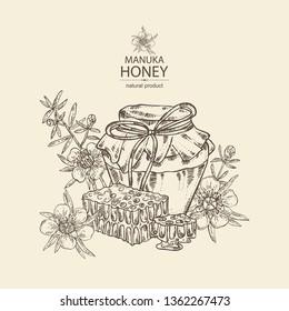 Background with manuka honey:   flowers of manuka and  jar of honey, honeycomb. Vector hand drawn illustration.