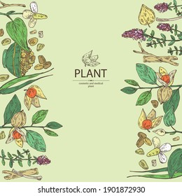 Background with medical plant: ashwagandha root and berries of withania somnifera, fenugreek seeds and flowers, flowers of thyme and houttuynia. Cosmetic and medical plant.Vector hand drawn
