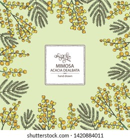 Background with mimosa: mimosa flowering branch and leaves. Acacia dealbata. Cosmetic, perfumery and medical plant. Vector hand drawn illustration
