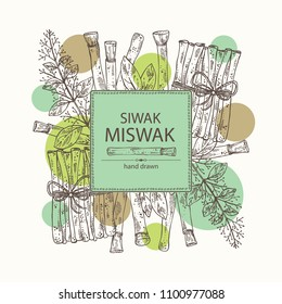 Background with miswak, siwak: natural toothbrush, plant, branch and leaves. Vector hand drawn illustration.