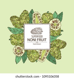 Background with background with morinda, noni fruit: branch with noni fruit. Super food. Vector hand drawn illustration