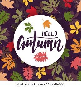 Background with multicolor autumn leaves. Vector illustration. Layout for discount labels and shopping.