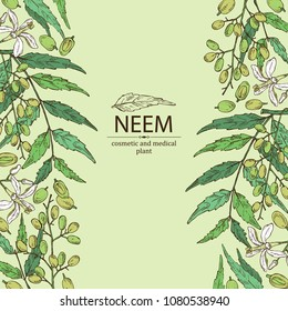 Background with neem, leaves and selling. Cosmetics and medical plant. Vector hand drawn illustration.