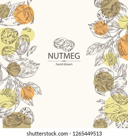 Background with nutmeg: nut and branch. Vector hand drawn illustration