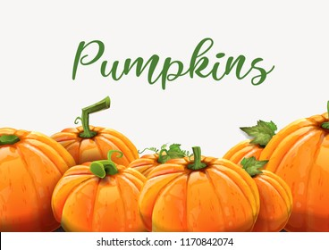 Background of orange autumn pumpkins - Pumpkins of different size on white background. Vector