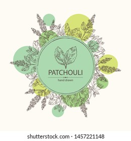 Background with patchouli: patchouli branch with leaves and flowers. Cosmetics and medical plant. Vector hand drawn illustration.