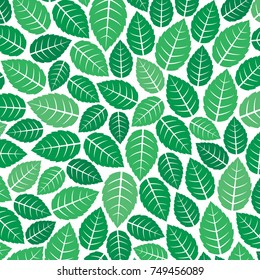 background pattern with fresh mint leaves