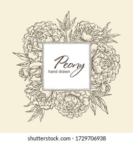 Background with peony: flowers of peony and leaves. Vector hand drawn illustration