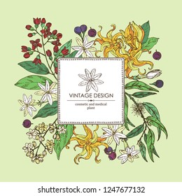 Background with perfumery, cosmetics and medical plant: camphor tree, sandalwood, flower ylang-ylang, jasmine flower and eucalyptus. Vector hand drawn illustration.