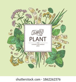 Background with perfumery, cosmetics and medical plant: tansy flowers, plant and root of acorus calamus,  melissa plant and valeriana flower and root. Vector hand drawn illustration