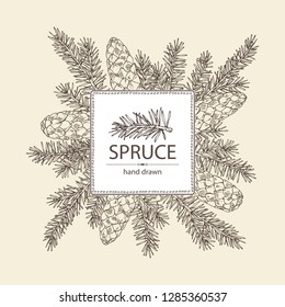 Background with pine tree: branch of pine tree with cone. Vector hand drawn illustration.