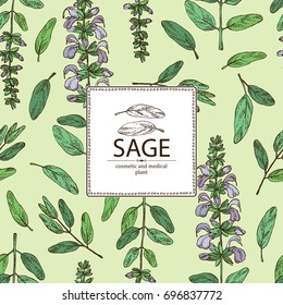 Background with sage, branch of sage, leaves and flowers. Cosmetic, perfumery and medical plant. Vector hand drawn illustration.