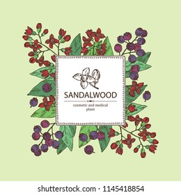 Background with Sandalwood: leaves berries and flowers. Santal white. Perfumery, cosmetics and medical plant. Vector hand drawn illustration