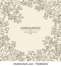 Background with Sandalwood: leaves berries and flowers. Santal white. Perfumery, cosmetics and medical plant. Vector hand drawn illustration.