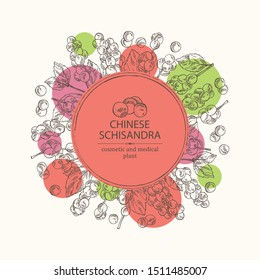 Background with schisandra chinensisi: schisandra branch with leaves and berries. Magnolia vine berries. Cosmetics and medical plant. Vector hand drawn illustration.