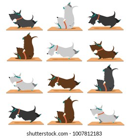 background scottish terrier doing yoga Yoga poses