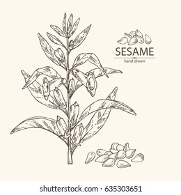 Background with sesame: plant and sesame seeds. hand drawn