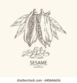 Background with sesame: plant and seeds. hand drawn
