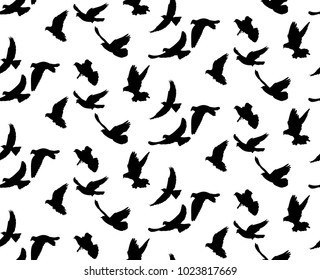 background with a silhouette of flying birds, isolated on white background