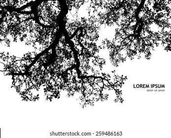 Background silhouette of tree branches. Vector