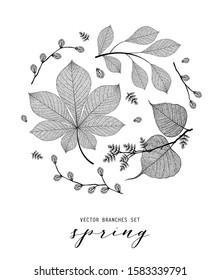 Background of skeleton leaf, autumn, spring, summer. Isolated detailed eco macro illustration.  Botanical illustration, vein transparent objects design, minimalist line style, not autotrace
