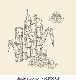 Background with sugarcane: cane sugar and sugarcane. Hand drawn.