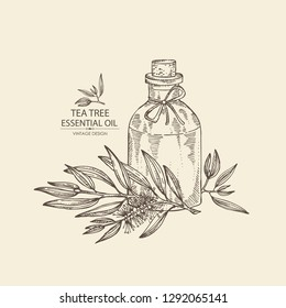 Background with tea tree and bottle of essential oil. Cosmetic, perfumery and medical plant. Vector hand drawn illustration