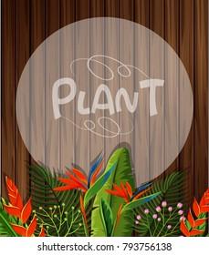 Background template with birdofparadise flowers illustration
