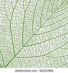 Background texture leaf. Vector illustration. EPS 10