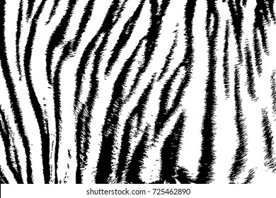 background texture tiger stripe black white