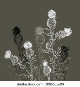 Background with  thistle sketch. Monochrome composition. Vector  illustration in vintage style. Hand-drawn herbs.