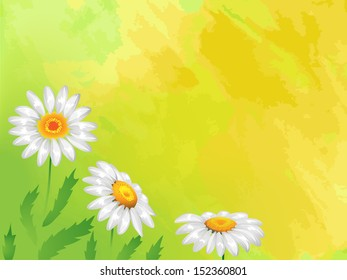Background: Three daisies on a yellow background