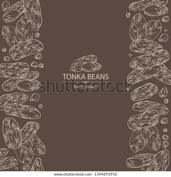 Background Tonka Beans Tonka Fruit Beans Stock Vector