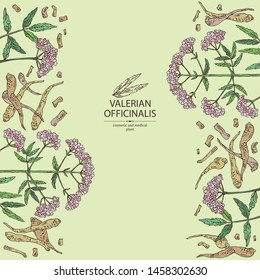 Background with valerian officinalis: valeriana flower and roott. Cosmetic and medical plant. Vector hand drawn illustration.