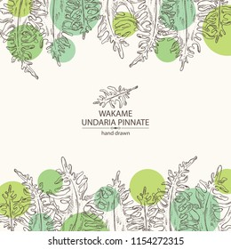 Background with wakame: undaria pinnate seaweed, wakame leaves. Brown algae. Edible seaweed. Vector hand drawn illustration.