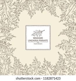 Background with wakame: undaria pinnate seaweed, wakame leaves. Brown algae. Edible seaweed. Vector hand drawn illustration.