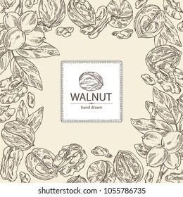 Background with walnut: nuts and brahch with walnut. Vector hand drawn illustration.