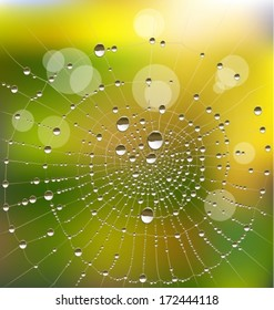 Background with water drops on a spider web in a sunny morning. Vector illustration.