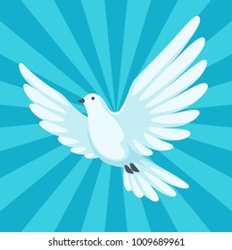 Background with white dove. Beautiful pigeon faith and love symbol.