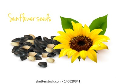 Background with yellow sunflowers and sunflower seeds. Vector illustration.