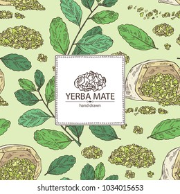 Background with yerba mate: mate branch and leaves. Vector hand drawn illustration.