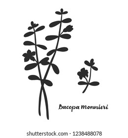 Bacopa monnieri isolated on white background vector illustration. Medicinal herb.