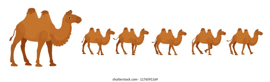 Bactrian or a two-humped camel, a cartoon character for a walking cycle animation