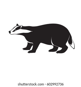 Badger on short legs isolated on white background. Forest animal with black and whitey coat. Vector illustration of brock species of mammal