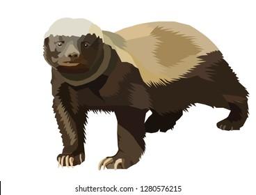 badgerlike honey badger brock vector bee eater ratel